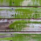 Horizontal plank wall with green mold by Kristian Tuhkanen