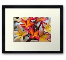Frangipani Bouquet Framed Print