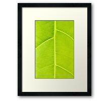 Green leaf close up nature background Framed Print
