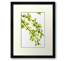 Green leaves in sunlight background Framed Print
