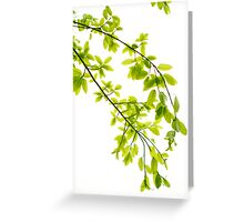 Green leaves in sunlight background Greeting Card