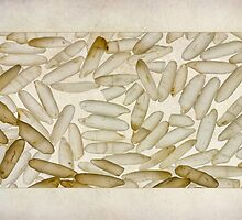 Textured Rice Grains by John Edwards