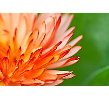 Orange flower petals, close-up shot. Photographic Print