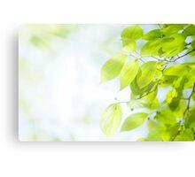 Green leaves under sunlight Canvas Print