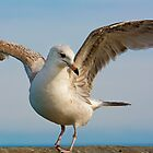 Seagull Dance by imagetj