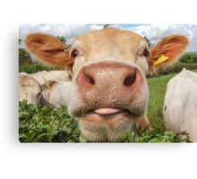 Funny Cow Sticking Tongue Out Canvas Print