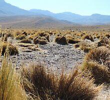 High planes in Atacama by Helen Morton