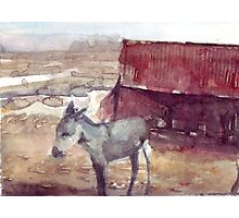 Donkey looking at distant mountains. Photographic Print