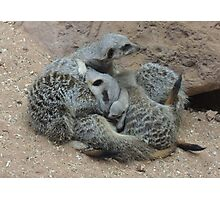 Meerkat Snuggle with Baby Photographic Print