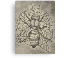 Bee etching  Canvas Print