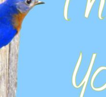 Eastern  Bluebird & His House - THANK YOU! Sticker