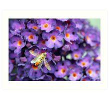 Bumble Bee in the Garden  Art Print