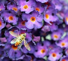 Bumble Bee in the Garden  by ericakristen
