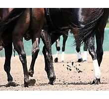 Horse Strutting on the Track  Photographic Print