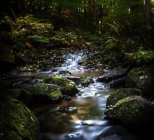 Down the ravine II by HappyMelvin