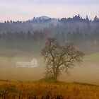 Foggy Morning by Mikeinbc1