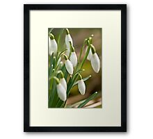 Winter Snowdrops Framed Print