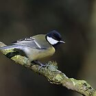 Great tit - II (Parus major Linnaeus) by Peter Wiggerman
