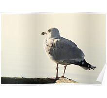 Seagull by the sea Poster