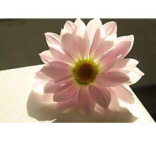 Light full flower Photographic Print