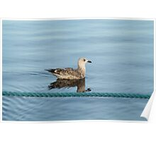 Seagull in the sea Poster