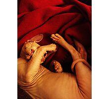 Sleeping sphynx kitten Photographic Print