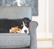 Birdie the Bernese Mountain Dog. by TheJill