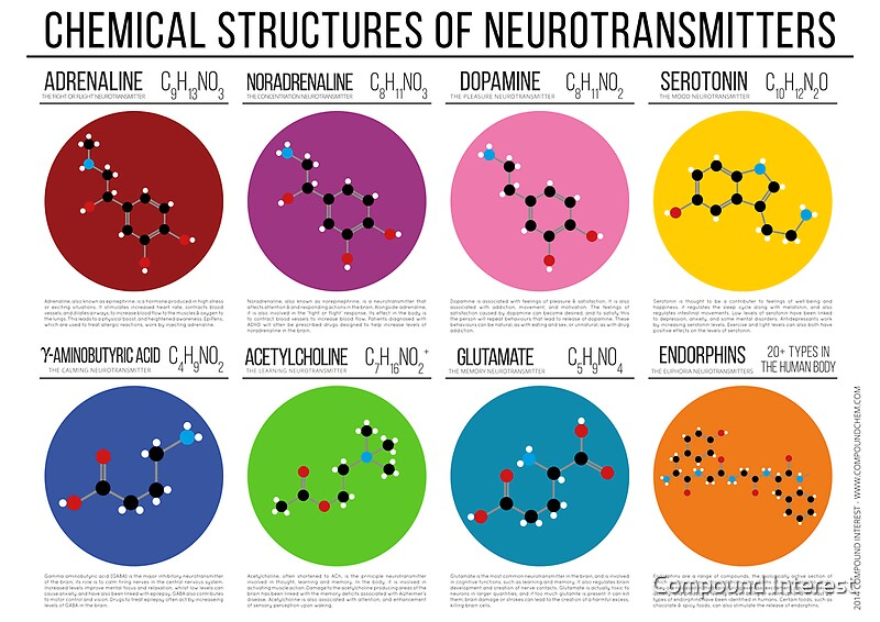 U0026quot Chemical Structures Of Neurotransmitters U0026quot  Posters By