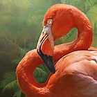blinding beauty - greater flamingo by R Christopher  Vest