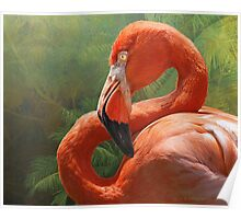 blinding beauty - greater flamingo Poster