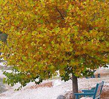 Autumn in the Okanagan by abbywerschler