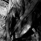 Scary Tree- Fallen Stringybark, Kaiser Stuhl Conservation Park by Ben Loveday