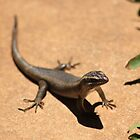 Enjoying the sun - African Striped Skink by Maree  Clarkson