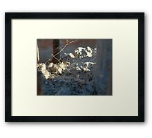 ©NS Trap Door Of Spider IA Framed Print