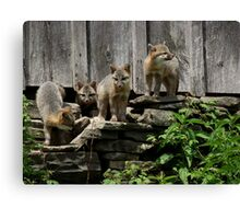 Fox Pups Canvas Print