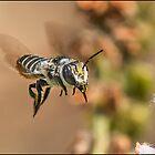 Pollen Carrier by Helenvandy