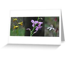 Wildflowers returning after a forest fire Greeting Card