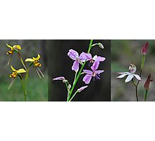 Wildflowers returning after a forest fire Photographic Print