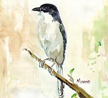 Janfiskaal (Lanius collaris) Fiscal Shrike by Maree Clarkson