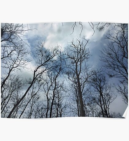 The beautiful deciduous tree  Poster