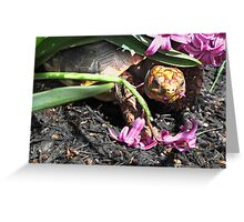 Mischievous Tortoise Greeting Card