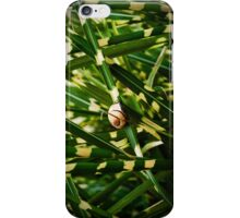 snail on miscanthus iPhone Case/Skin