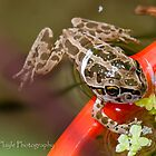 When tadpoles grow by Rick Playle