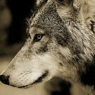 THE WOLF by Leny .