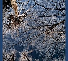 Trees grow to the sky - ice crystals by NafetsNuarb