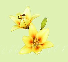 Tiger Lilies Art by DesignDorice