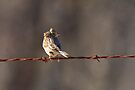 Wind Blown by NatureGreeting Cards ©ccwri