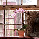 In the Pink by Elizabeth Bravo