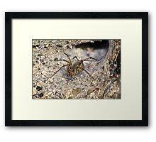 Agelenidae Spider in Funnel Web - Grass Spider Framed Print