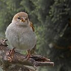 Puffed Up by Warren. A. Williams